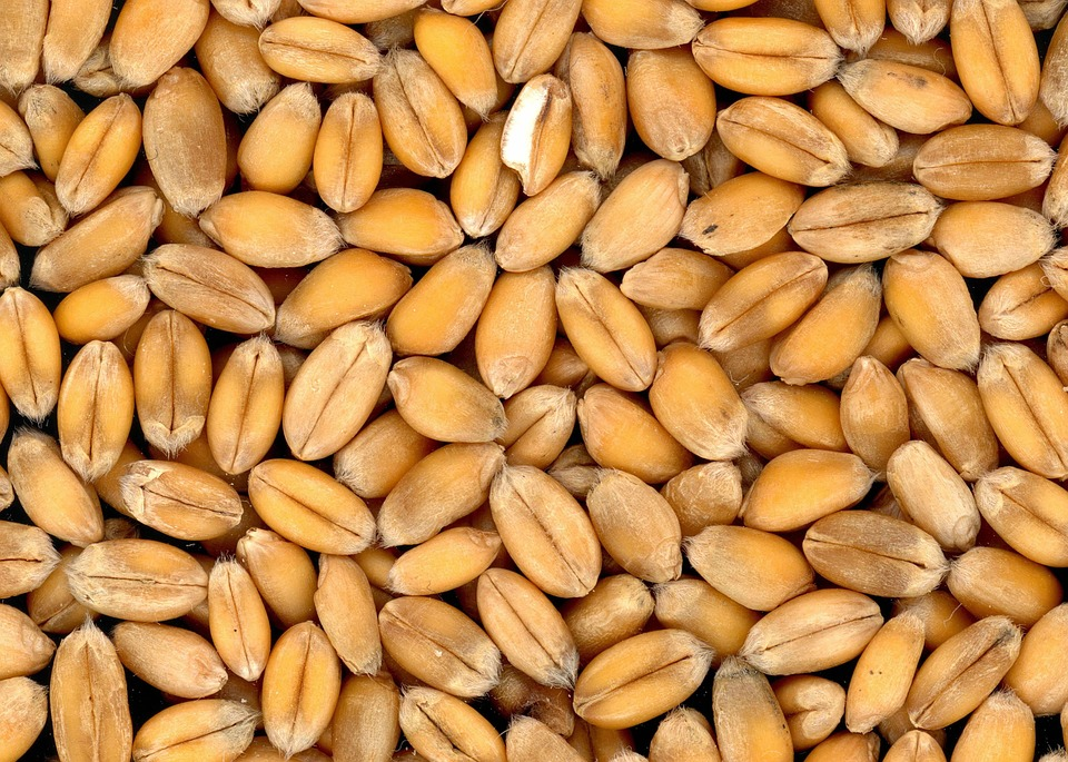 Health Gains With Whole Grains