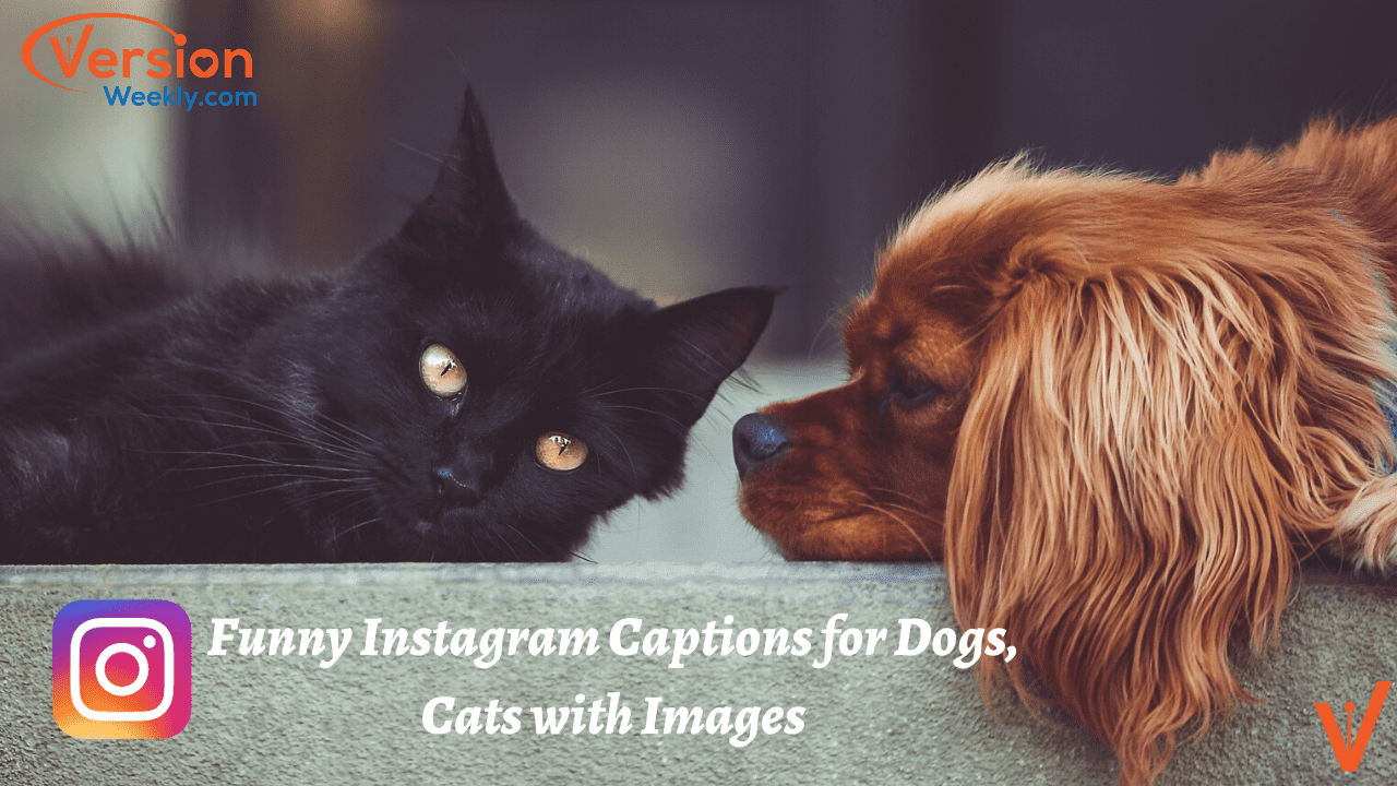 Funny Animal Pictures With Captions For Your Instagram Copy Paste Cute Instagram Quotes For Dogs Cats Make Your Followers Laugh Version Weekly