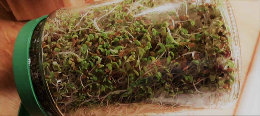 Un mélange de graines germées en gros plan !