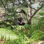 Bain de forêt ou Sylvothérapie : quand les arbres nous soignent…