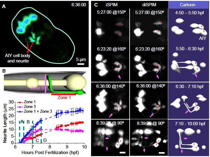 Isotropic Four-Dimensional Imaging with Dual-View Plane ...