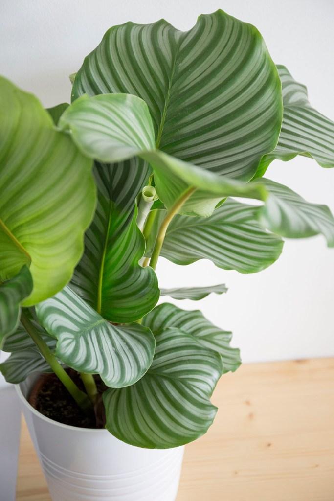 entretien interieur plante