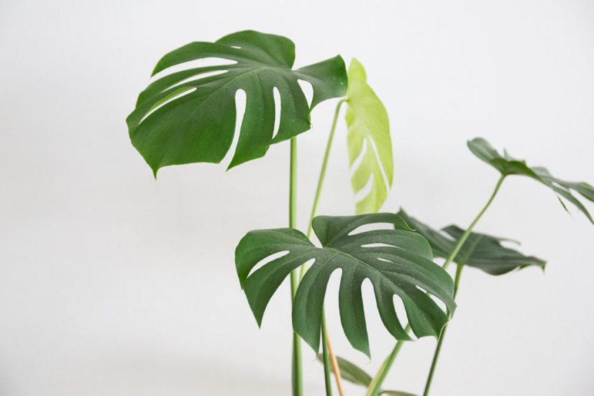 entretien plante interieur