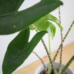 plante interieur entretien