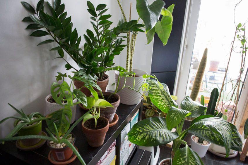 hiver plante interieur