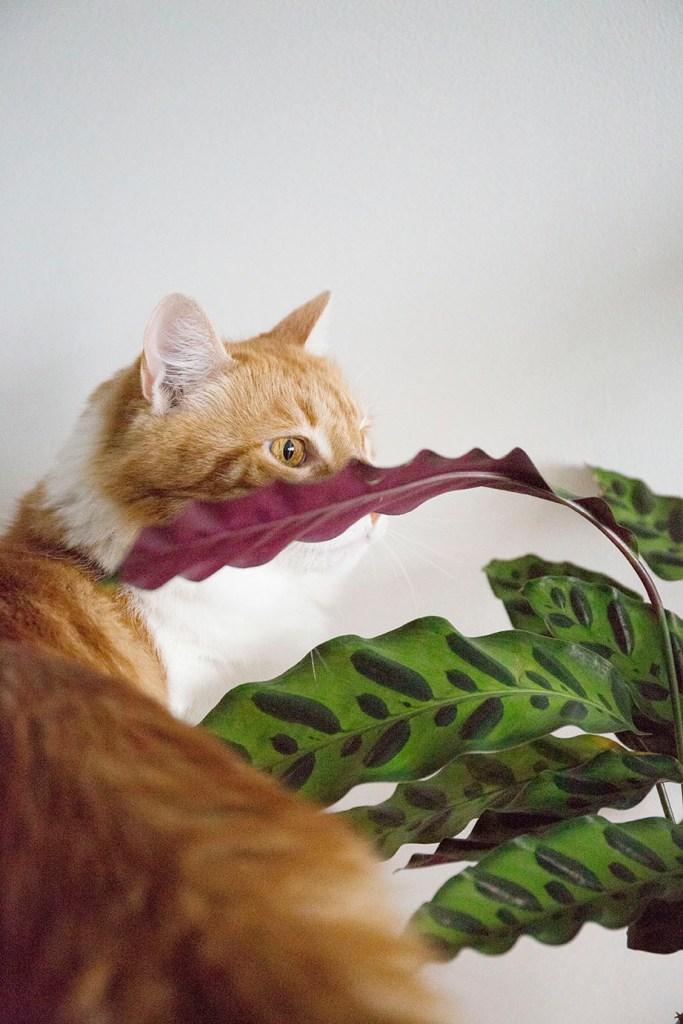 plantes animal leon george