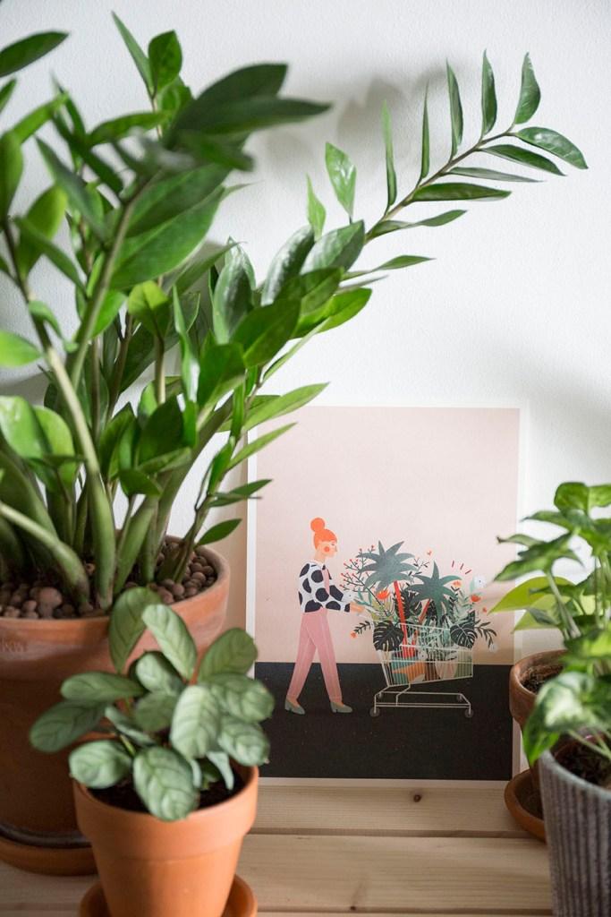 arual illustration plante