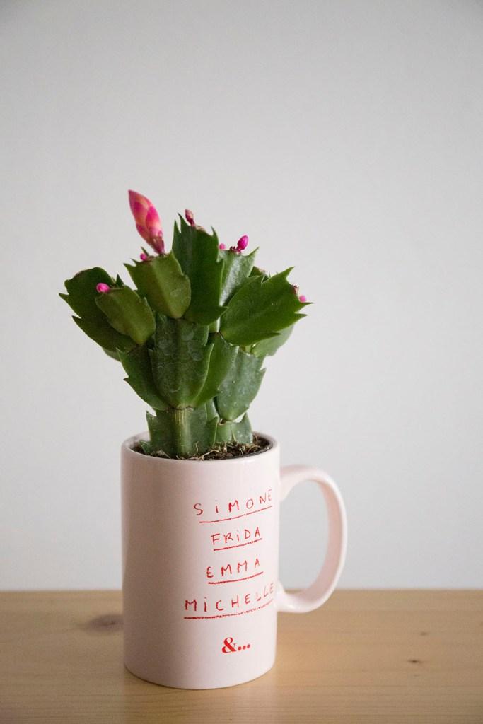 cactus hiver