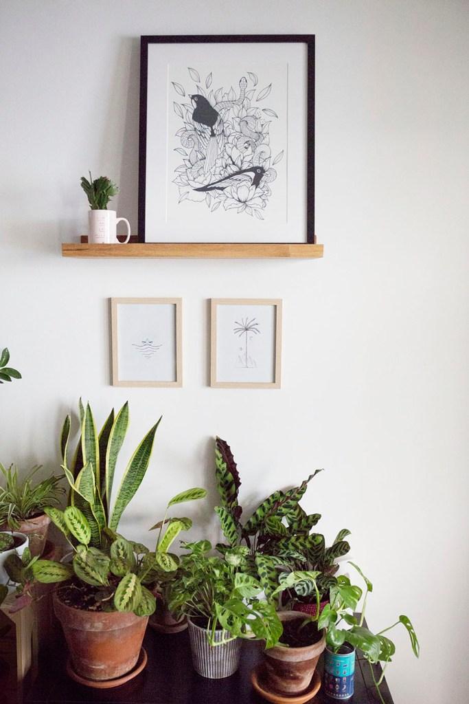 plante dinterieur chat