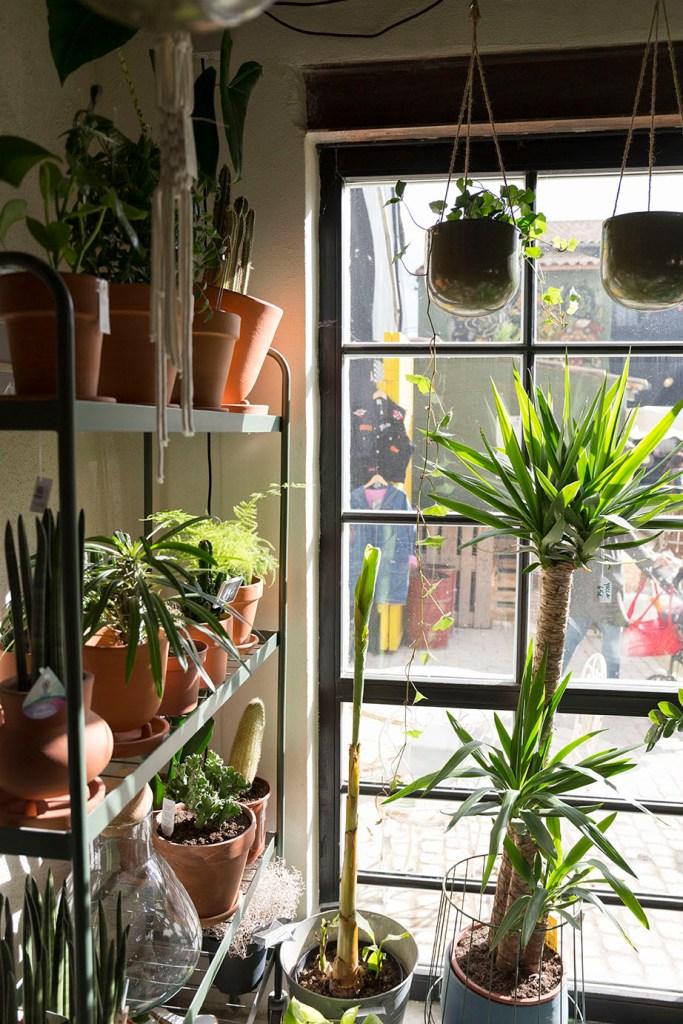 plantes shop fleuriste