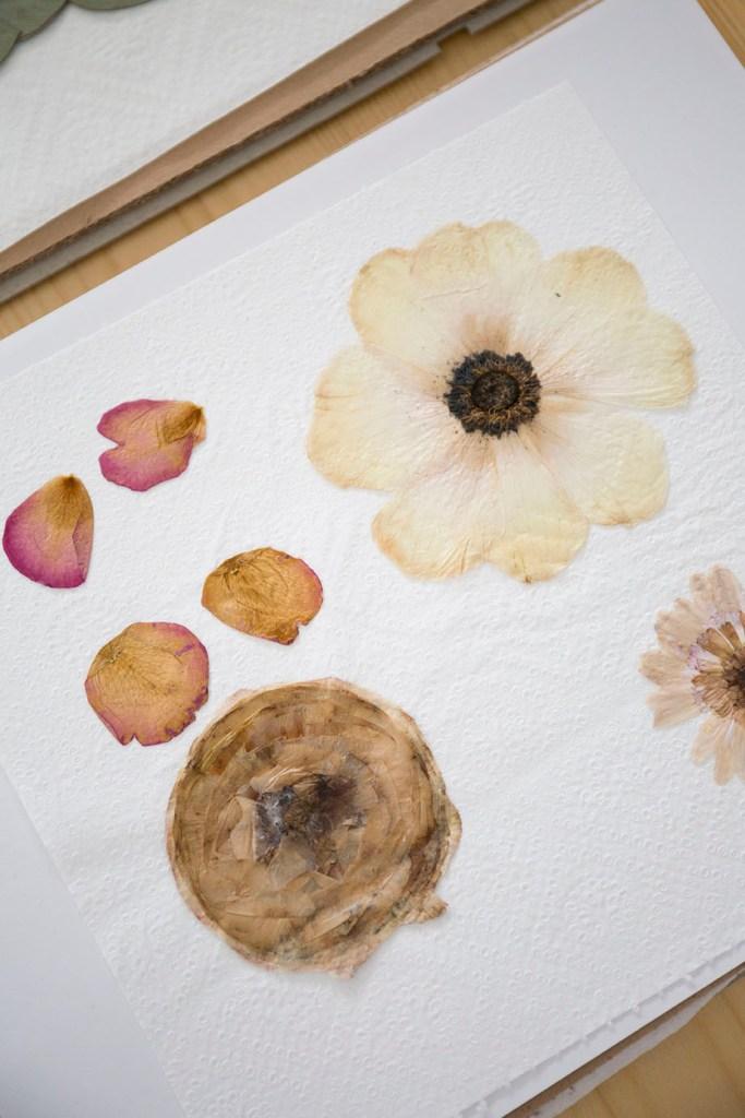 collection herbier fleur
