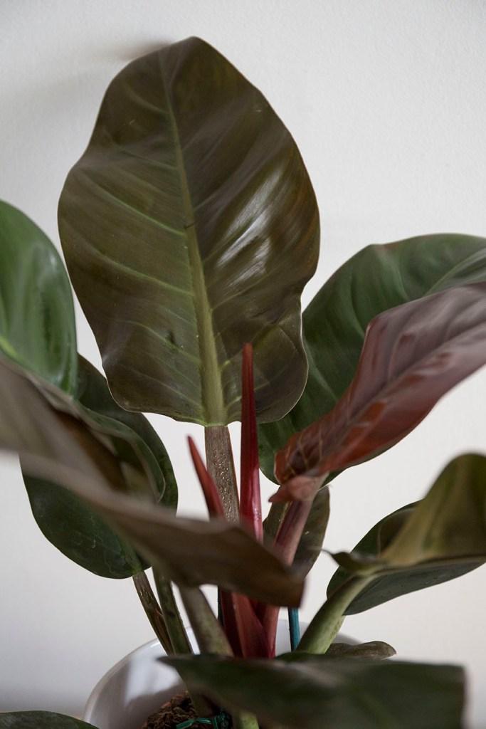 interieur verte plantes