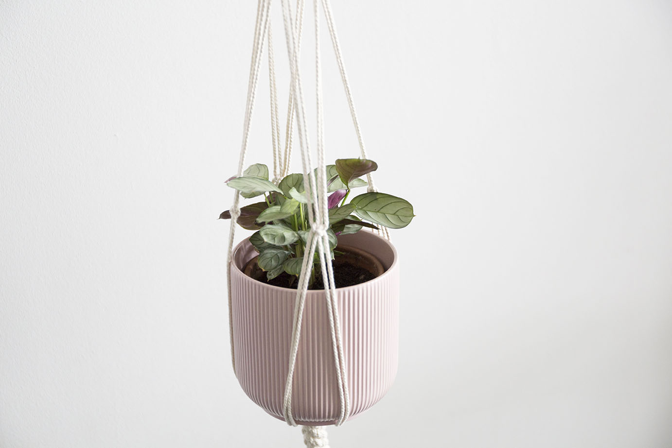suspension macrame au fil des plantes