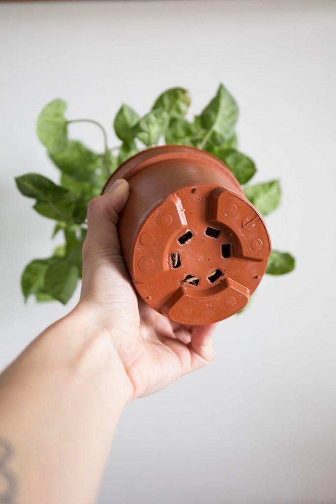 plante rempoter pot