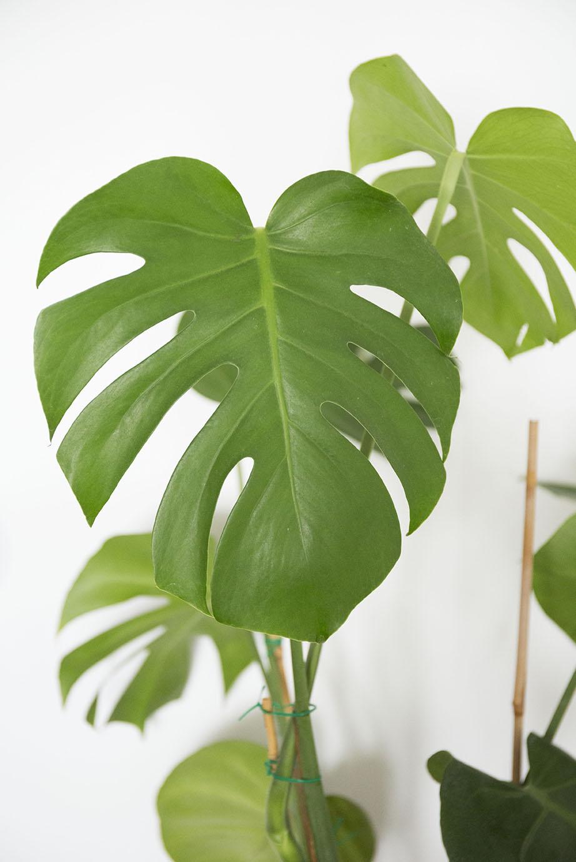 plante engrais interieur