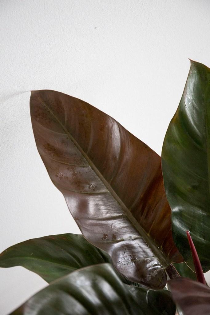verte plantes interieur