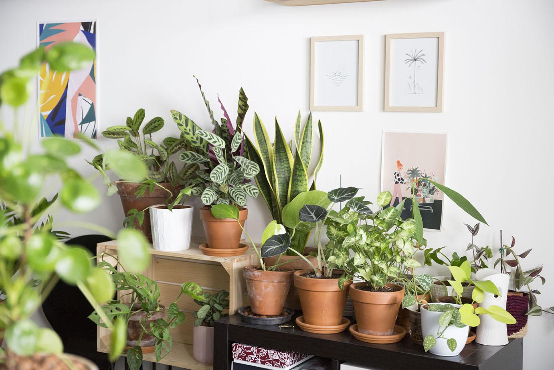 astuce chaleur plante