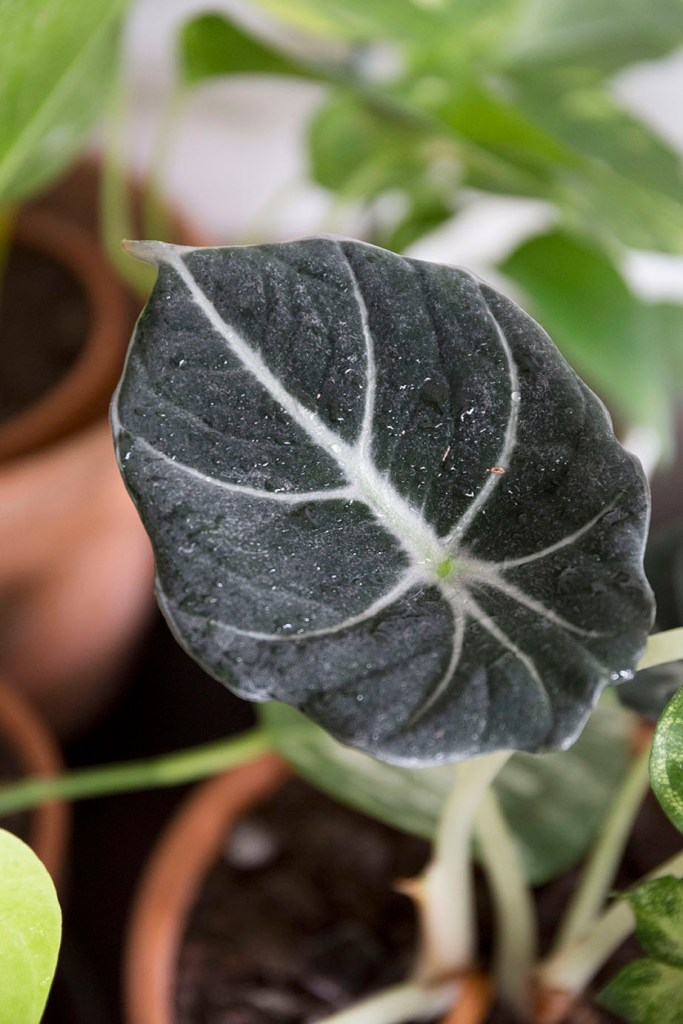 chaleur astuce plantes