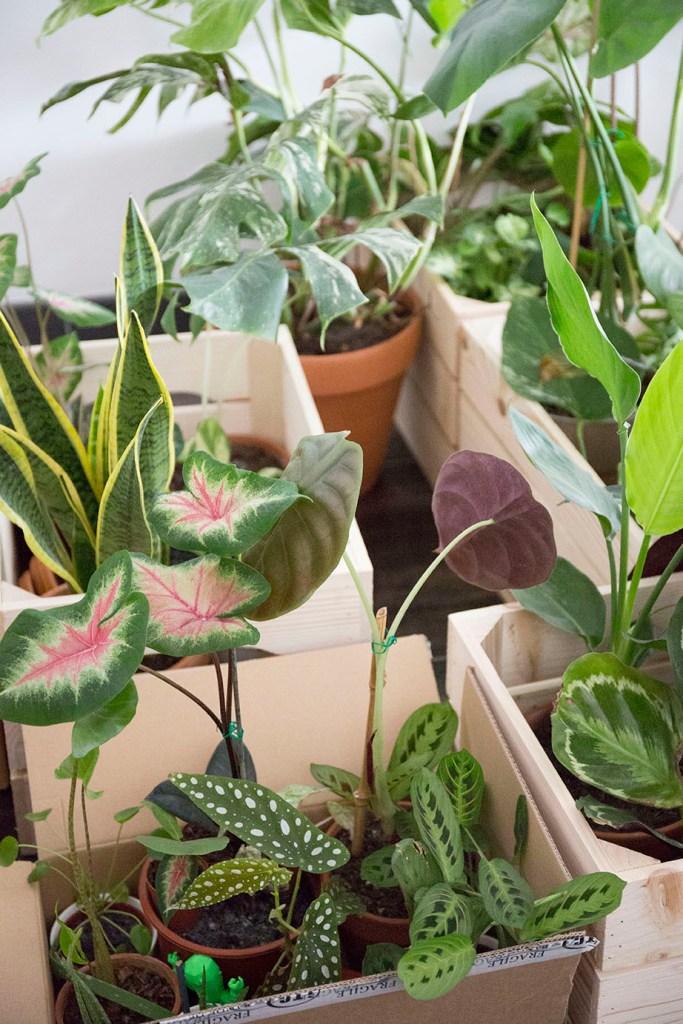 demenagement plante interieur