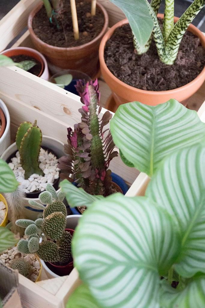 plante demenagement