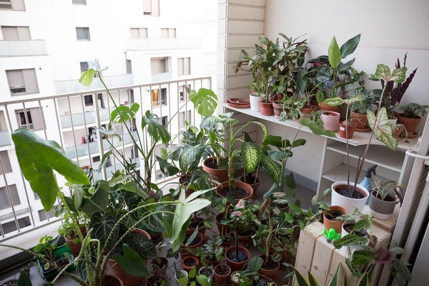 plante interieur demenagement