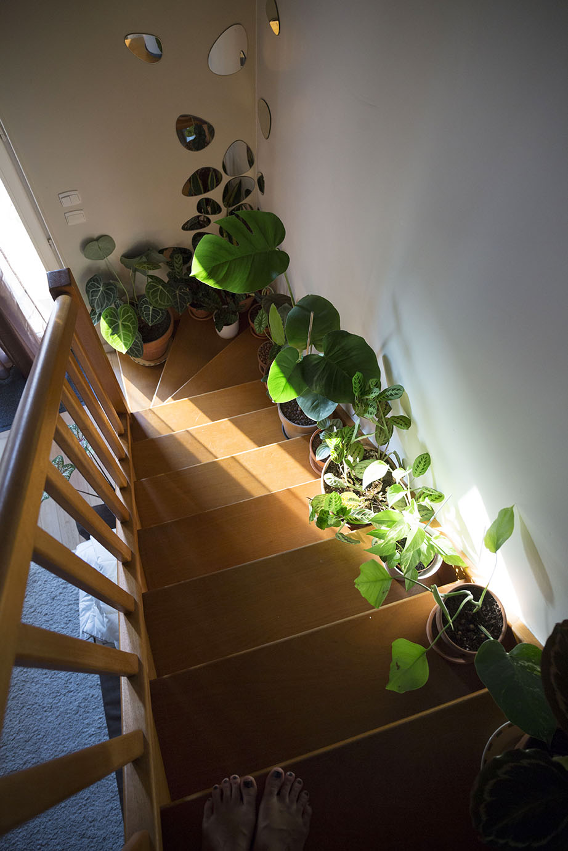 petit espace plantes