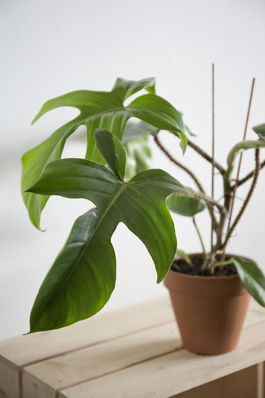 plante interieur verte