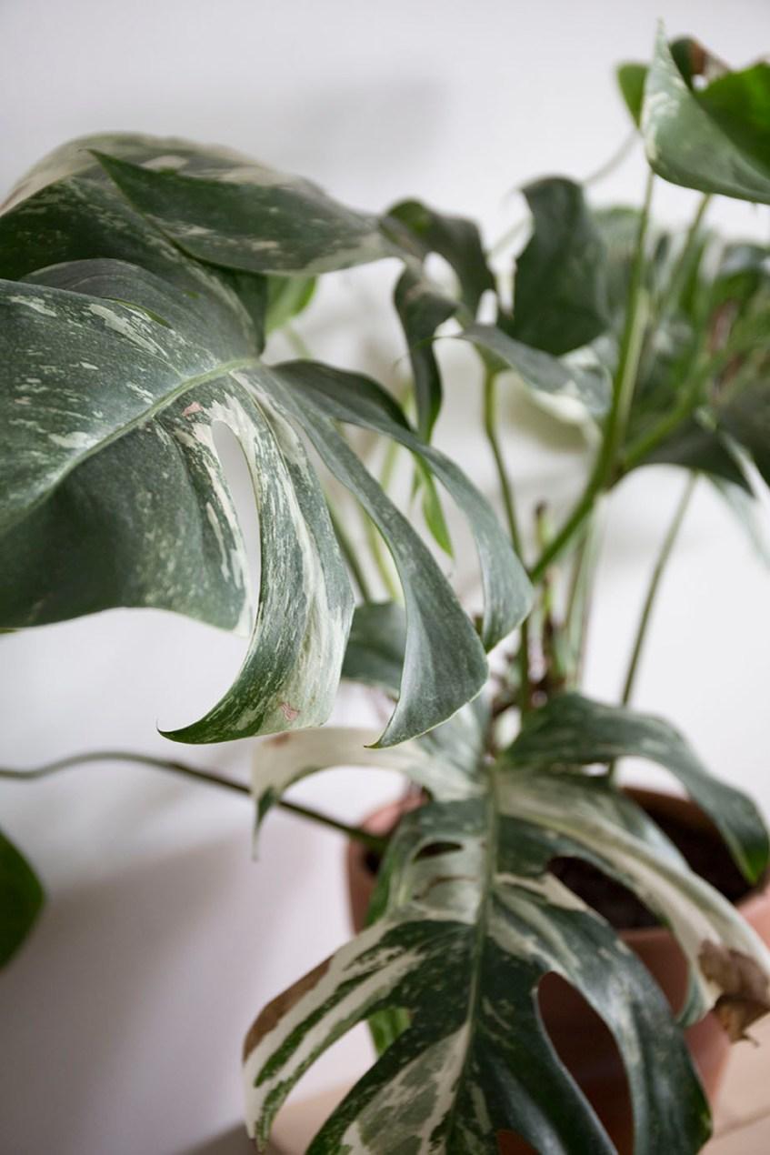 plante rare boutique en ligne