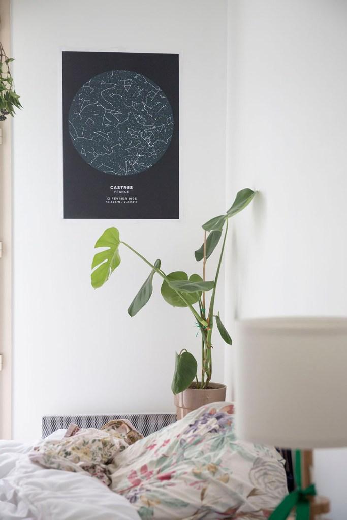 plante et decoration