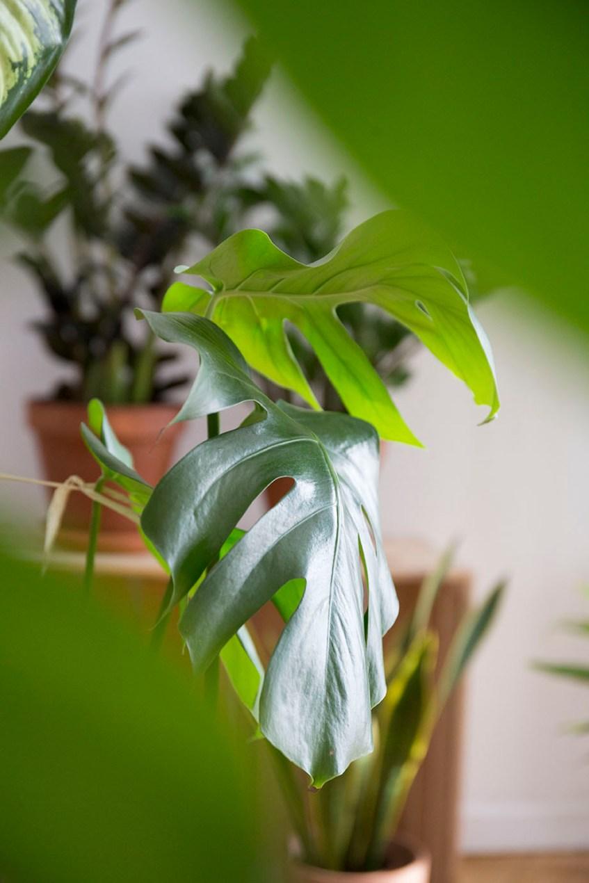 interieur sos plante