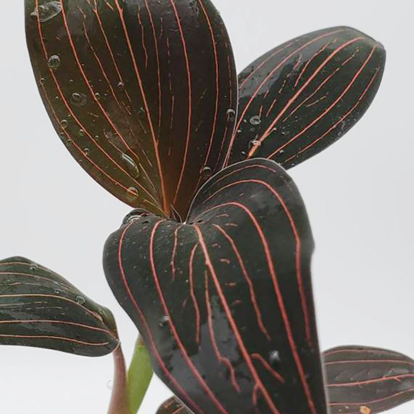 plante wishlist 2020