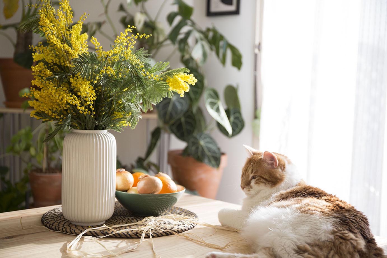 wishlist 2020 plantes