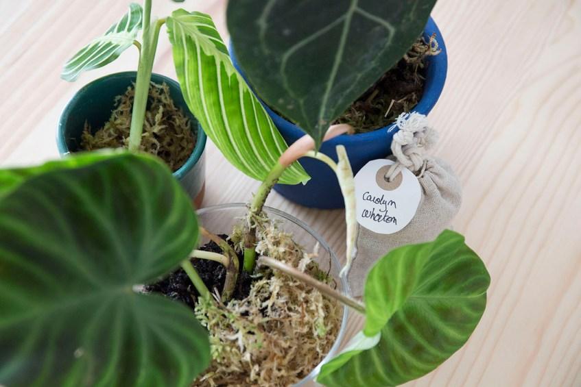 bouture plantes rares