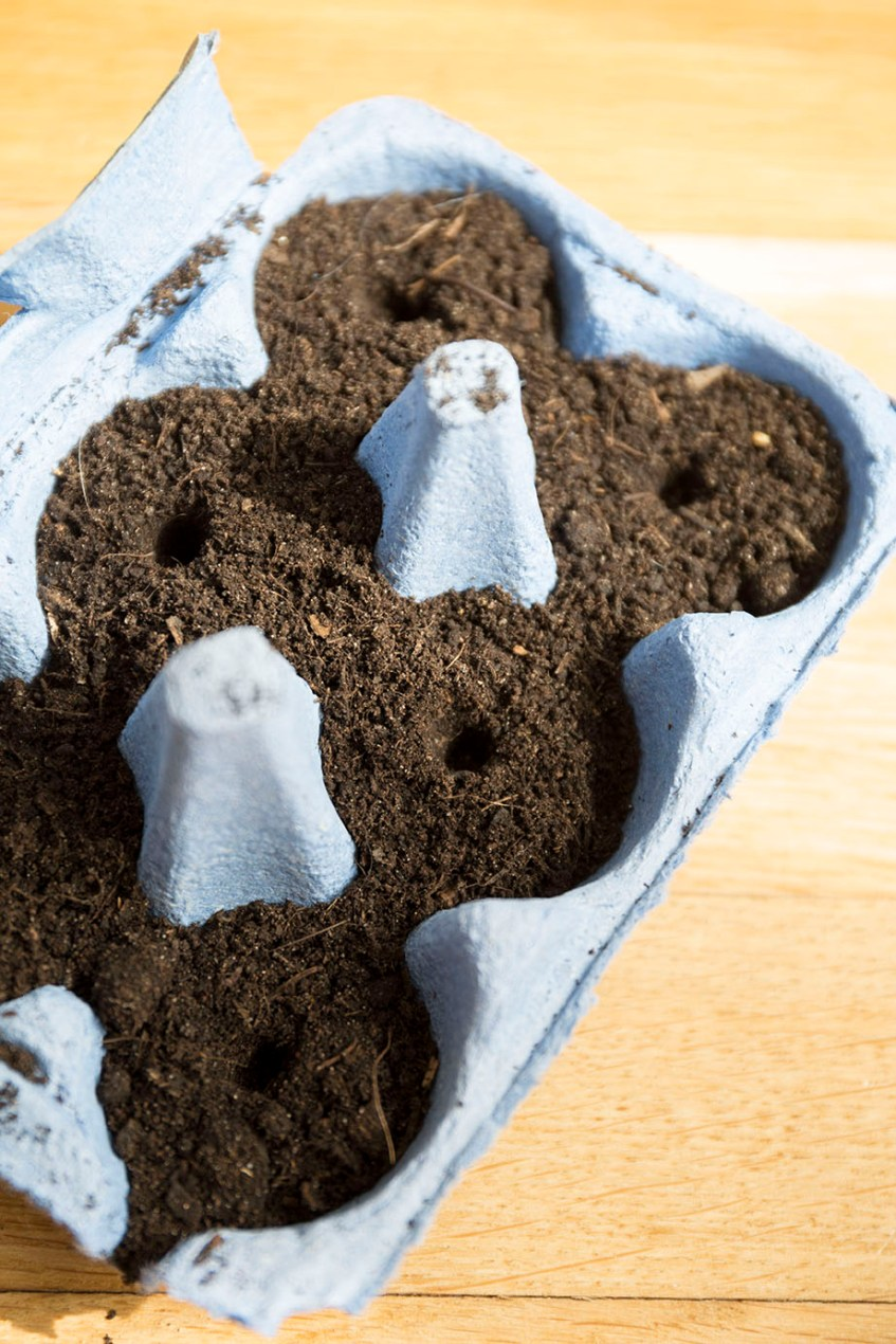 potager urbain semis