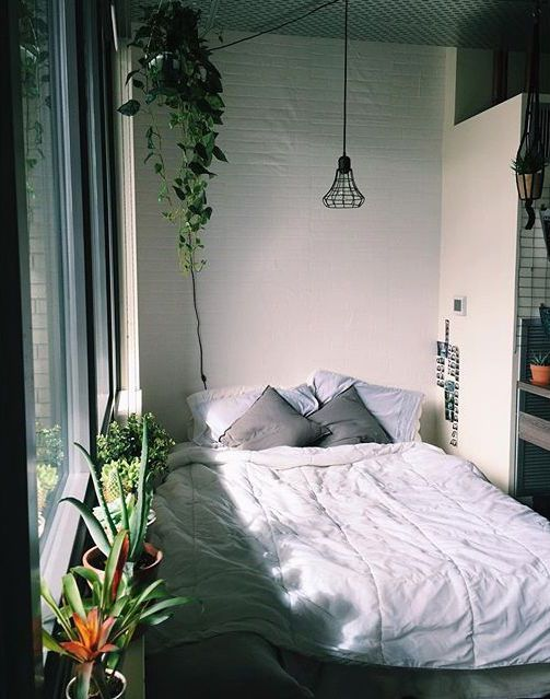 inspiration plante chambre