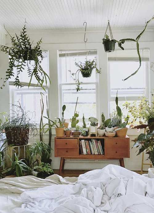 chambre-inspiration-plante
