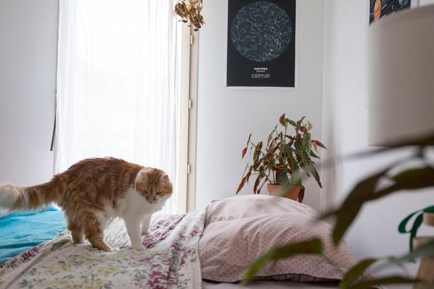 decoration plante chambre