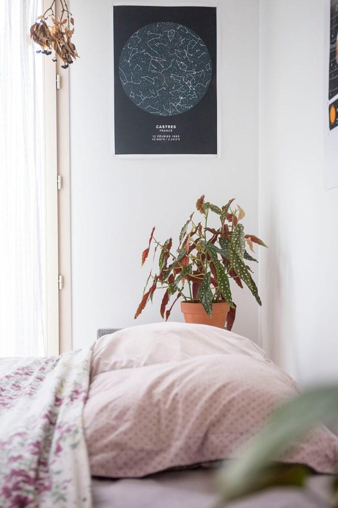 plante chambre decoration