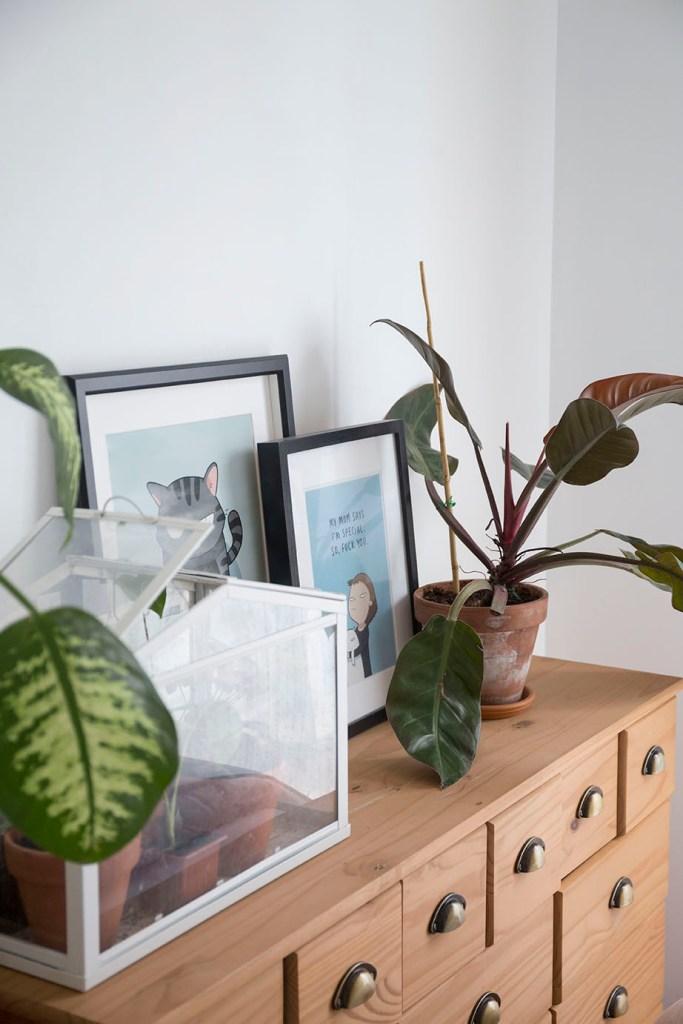 plante decoration chambre