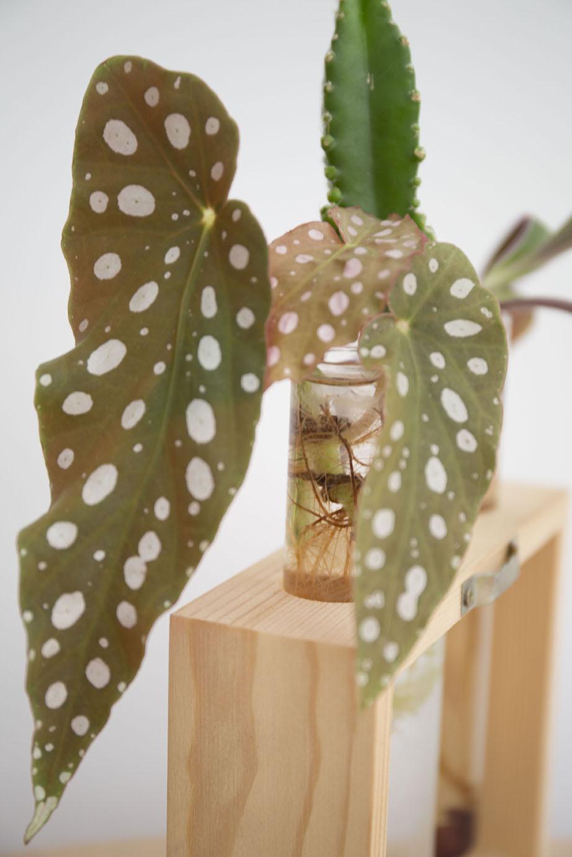 bouture reussir plante