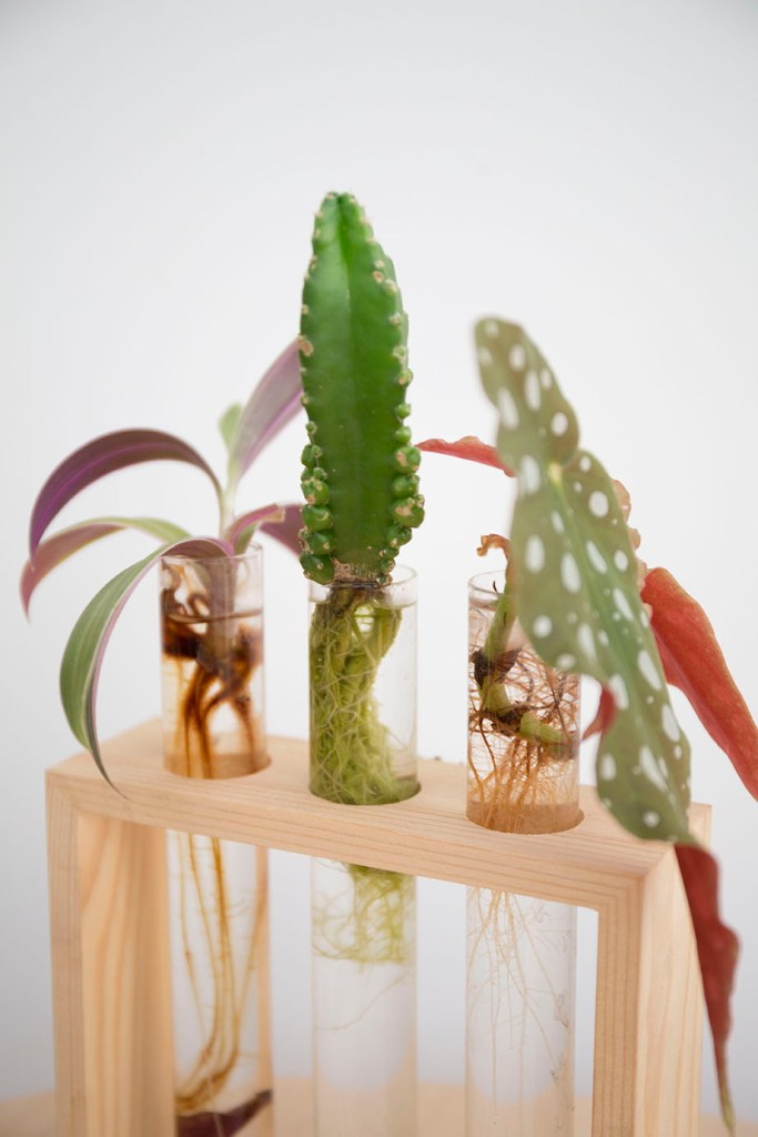 reussir bouture plante