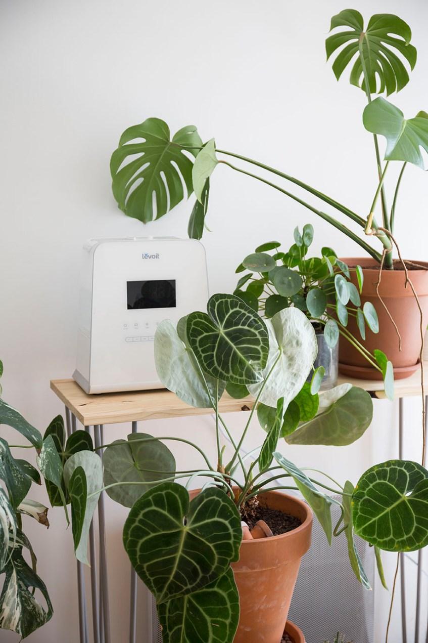 humidité taux plante