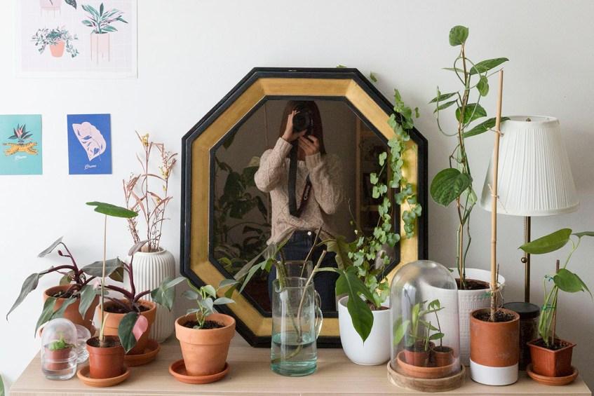 wishlit plante 2021