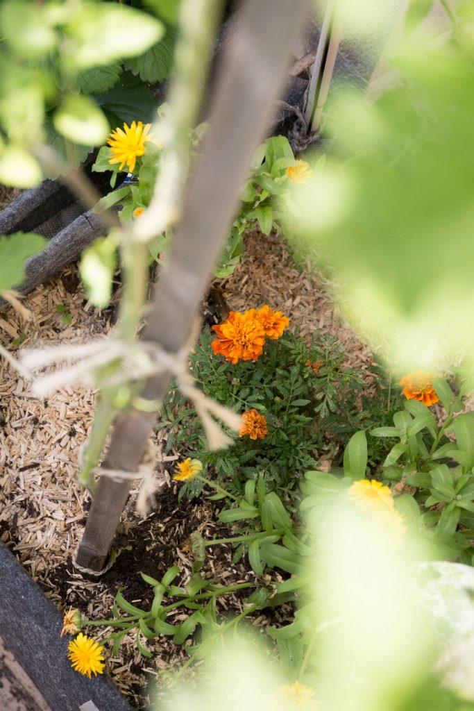 potager plante service