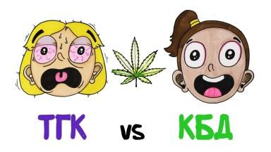 Мозг под веществами: ТГК и КБД AsapSCIENCE Vert Dider Травка марихуана наркотики
