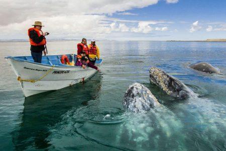 avistamiento-ballenas-990x660