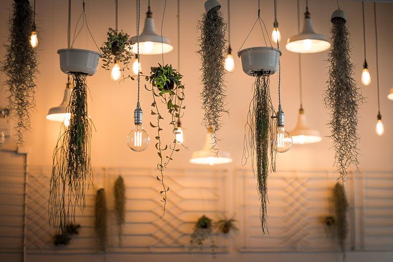 hängende Blumentöpfe und Lampen