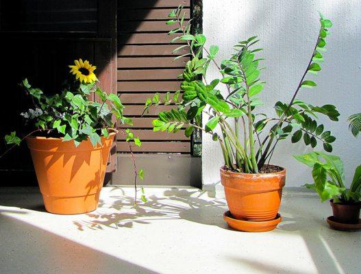 Zimmerpflanzen im Sonnenschein