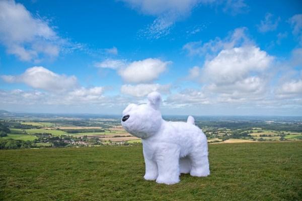 Snowdog Roodle at Devils Dyke