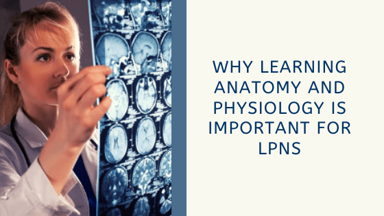 Why Learning Anatomy and Physiology is Important for LPNs